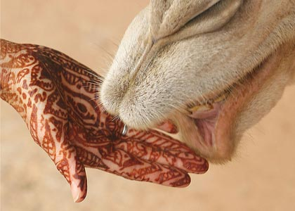 image of henna hand and camel mouth from wikipedia
